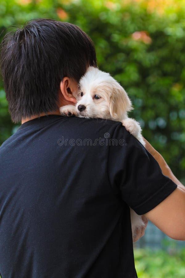 供以人员宠爱在他的肩膀的逗人喜爱的马尔他小狗 库存图片