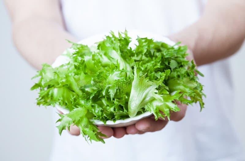 供以人员拿着有蔬菜沙拉叶子的一块板材  免版税图库摄影