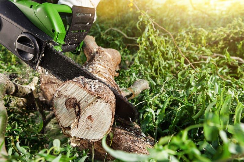 供以人员(伐木工人)使用一个电子锯,切口树 免版税库存照片