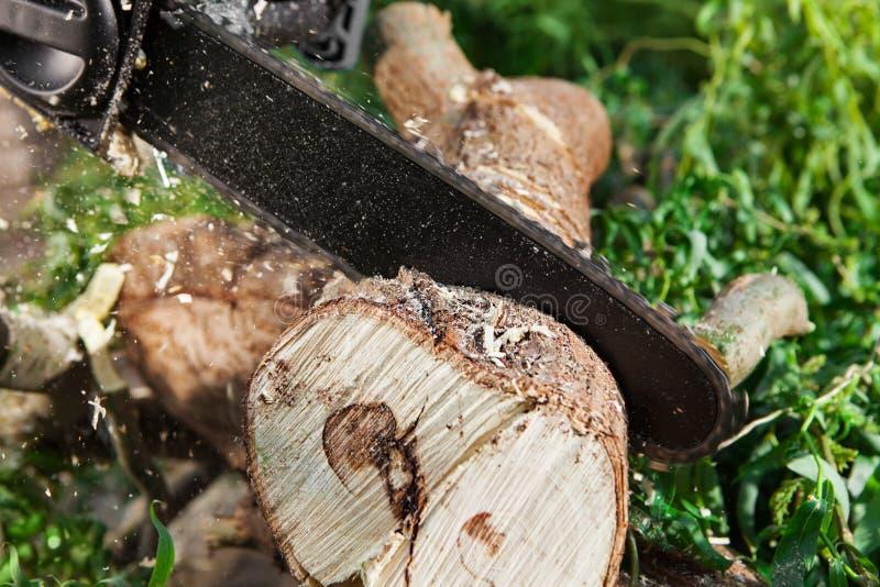 供以人员(伐木工人)使用一个电子锯,切口树 图库摄影