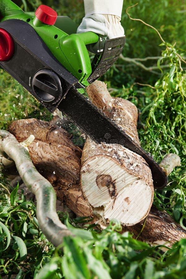供以人员(伐木工人)使用一个电子锯,切口树 库存图片
