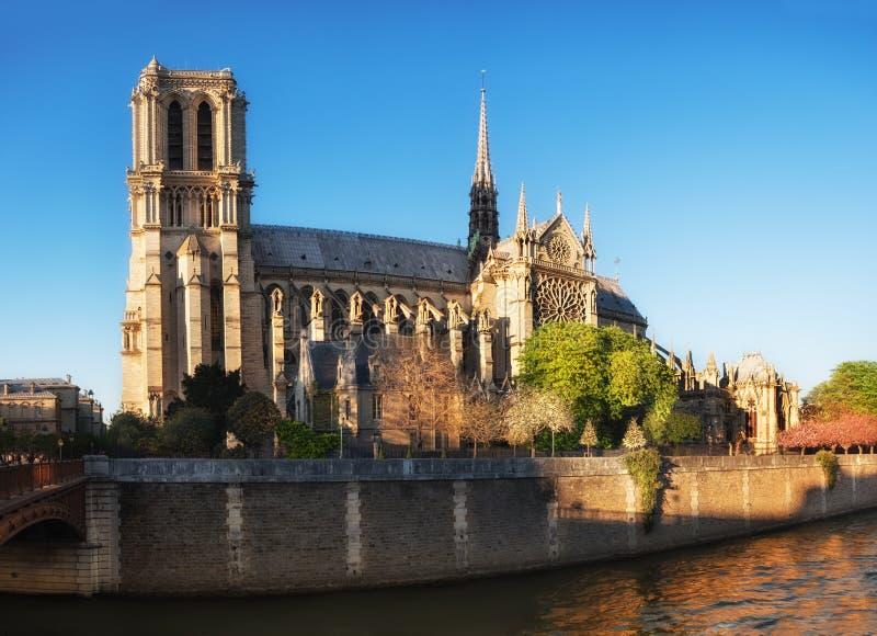 巴黎侧视图Notre Dame在春天 库存图片