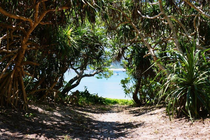 侧道路的热带植被对在座间味,冲绳岛的海滩 库存照片