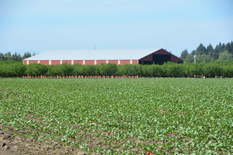 俄勒冈州威拉梅特谷一座现代农场建筑 免版税图库摄影
