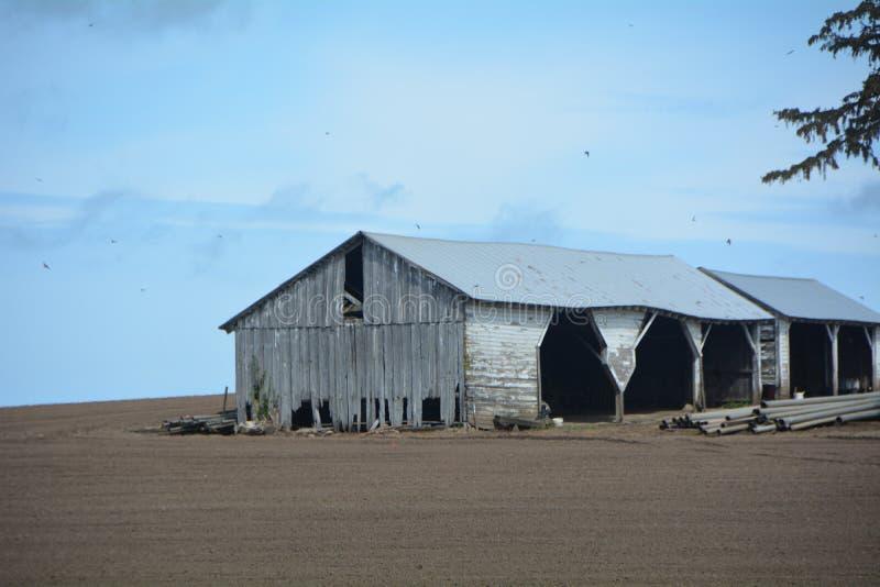 俄勒冈州威拉梅特谷旧谷仓 免版税图库摄影