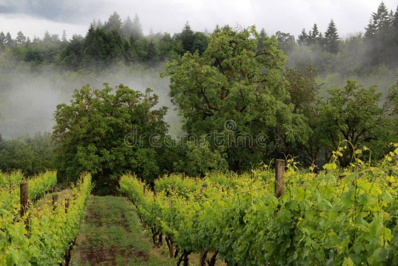 俄勒冈葡萄园在春天 库存照片