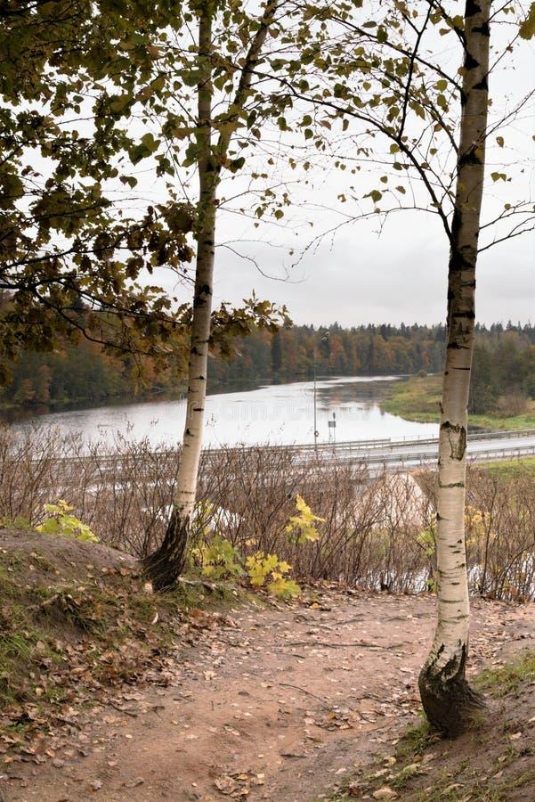 俄国河的桦树和看法在晚秋天 免版税库存图片