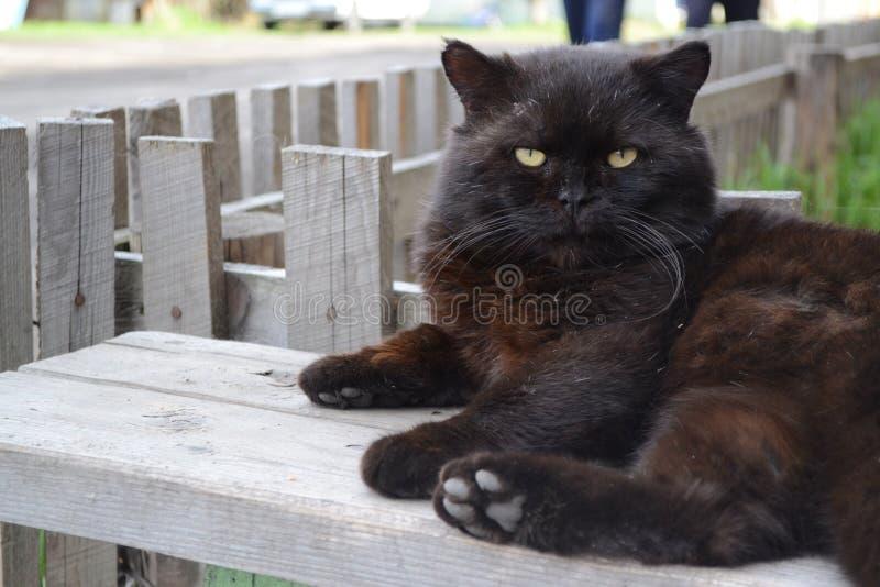 俄国猫 免版税库存图片