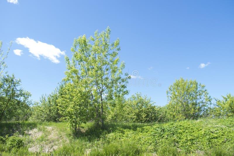俄国自然,风景调遣 草和天空 免版税库存照片