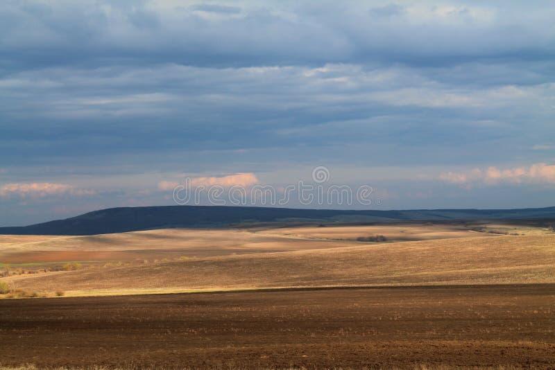 俄罗斯的金黄草甸 免版税库存图片