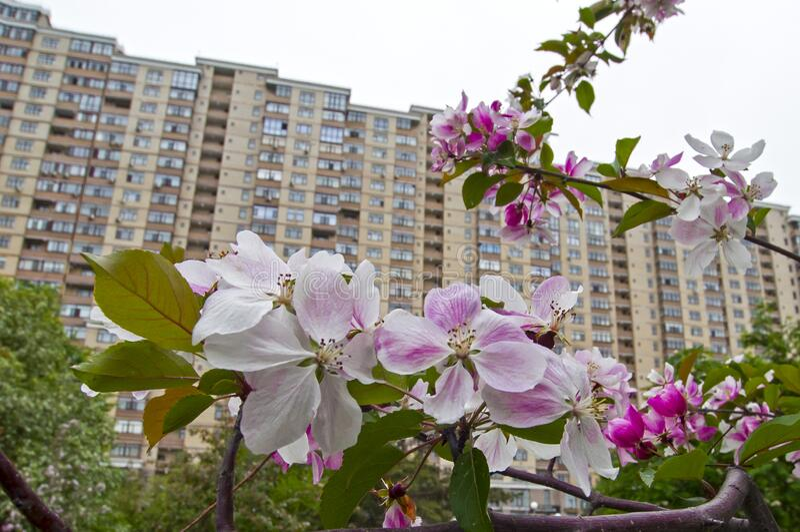 俄罗斯秋门,2020年5月15日:住宅复合体 免版税图库摄影