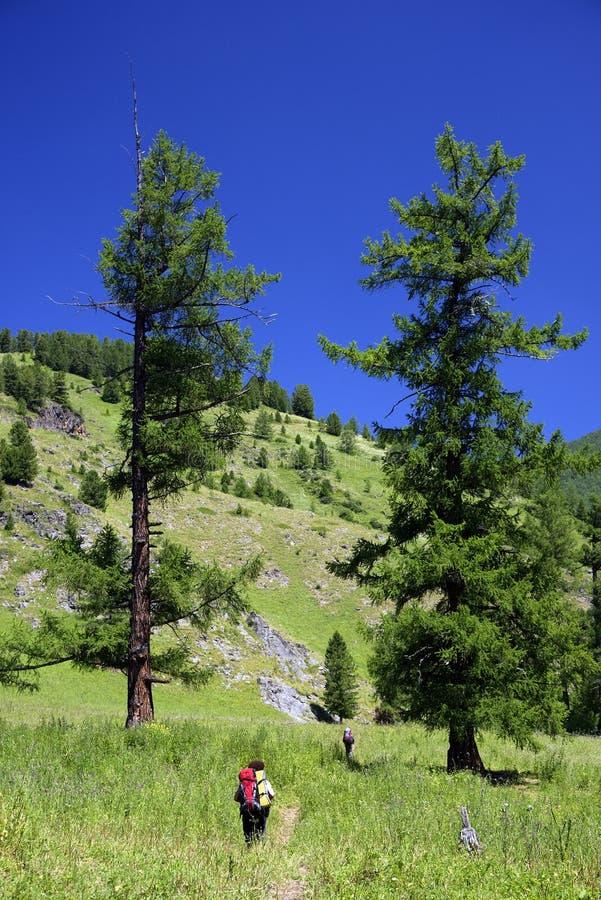 俄罗斯西伯利亚阿尔泰山夏季高山景观 图库摄影
