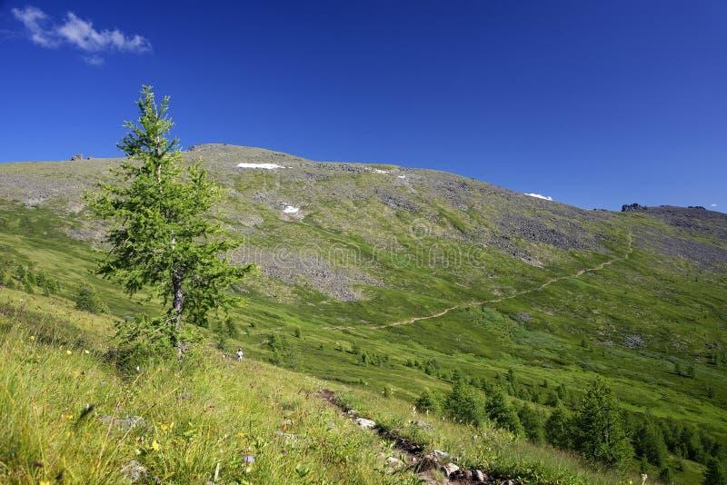 俄罗斯西伯利亚阿尔泰山夏季高山景观 免版税库存照片