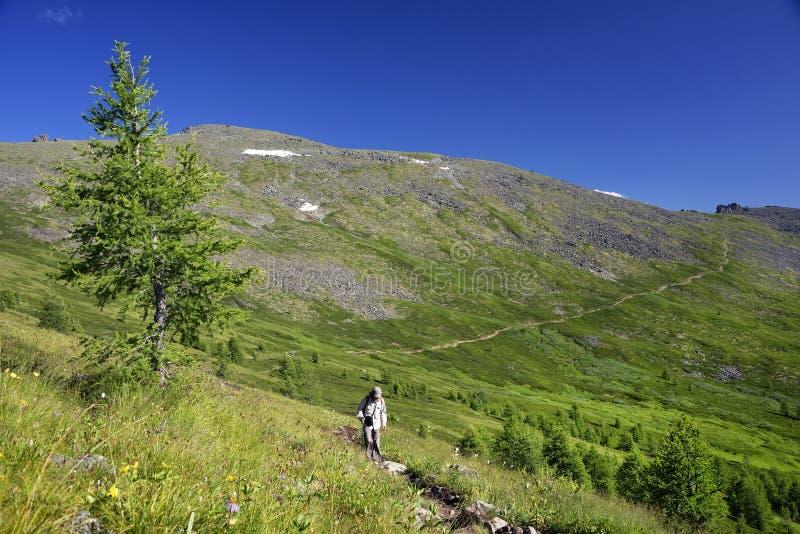 俄罗斯西伯利亚阿尔泰山夏季高山景观 库存图片