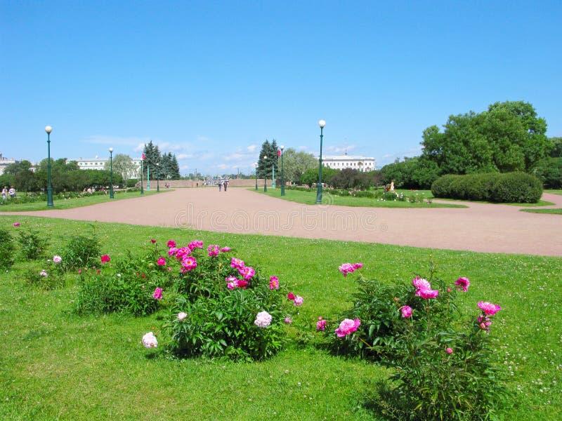 俄罗斯,圣彼德堡,火星,牡丹灌木的领域  免版税图库摄影