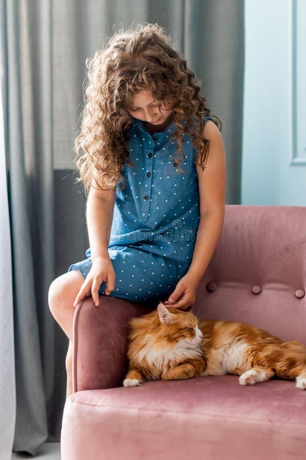 俏丽的女孩抚摸在椅子的一只红色蓬松猫 免版税库存图片