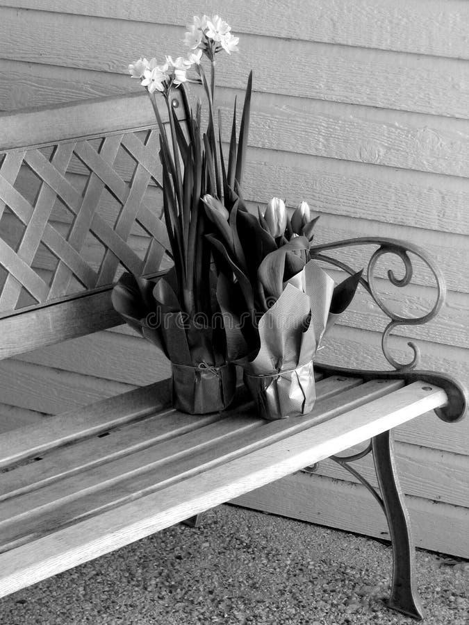 Download 俏丽的开会 库存图片. 图片 包括有 夏天, 礼品, 郁金香, 春天, ,并且, 产生, bulfinch, 门廊 - 57561