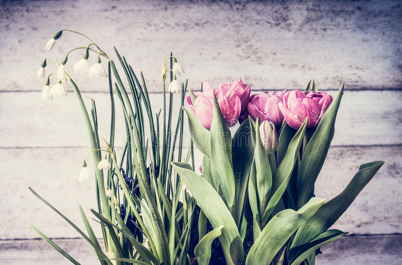 俏丽的春天花:snowdrops和郁金香在轻的木背景,正面图,春天从事园艺 免版税库存图片