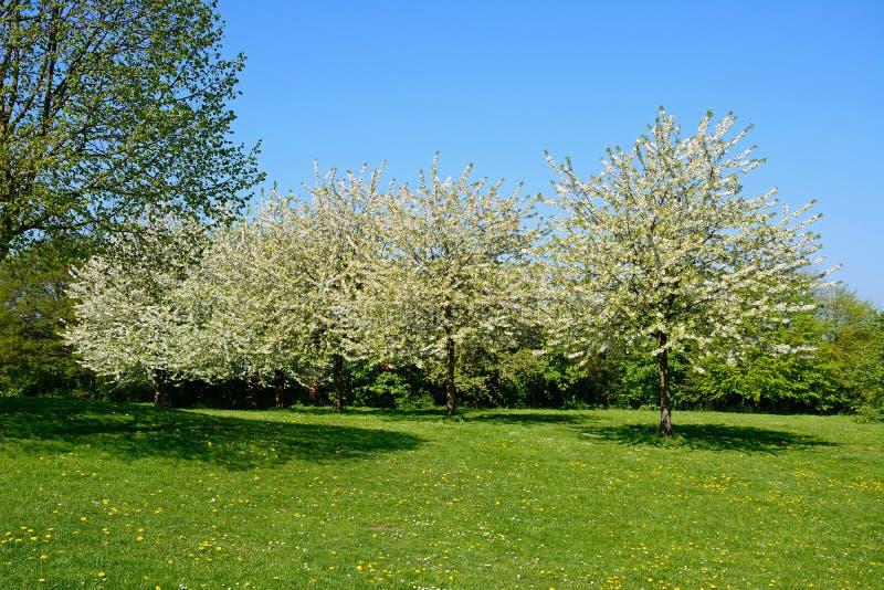 俏丽的春天草甸,英国 库存图片