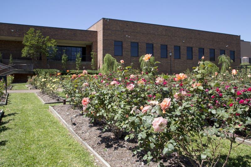 俏丽的玫瑰色公园在泰勒得克萨斯美国 免版税库存图片
