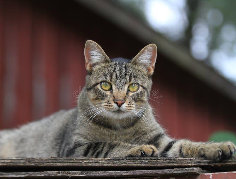 俏丽的老虎条纹猫画象 库存照片