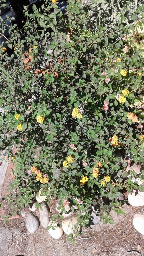 俏丽的花和蝴蝶 免版税库存照片