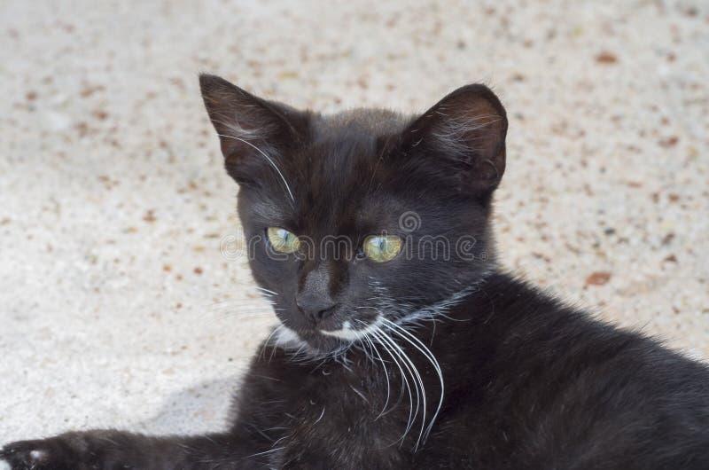 俏丽的黑白小猫在地板上蹲下了 图库摄影