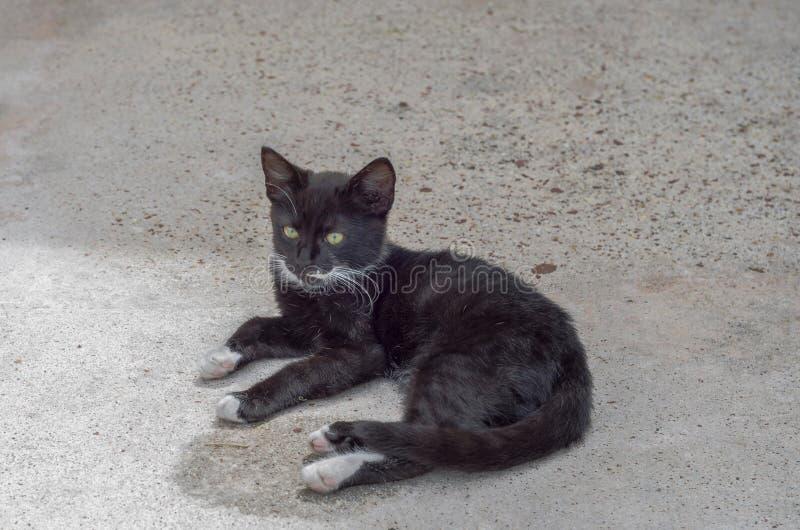 俏丽的黑白小猫在地板上蹲下了 库存照片