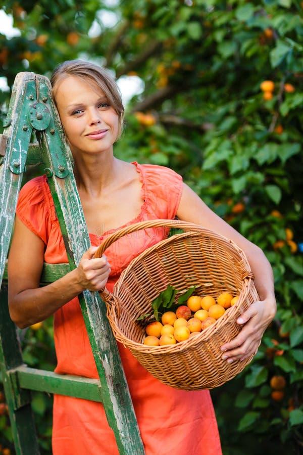 俏丽,少妇采摘杏子在温暖的夏天晚上之前点燃了 免版税库存照片