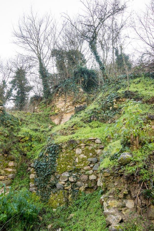 保加利亚山植被的特异 免版税库存照片
