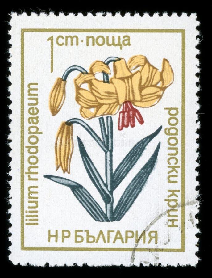 保加利亚`保护了花`系列邮票, 1972年 免版税库存图片
