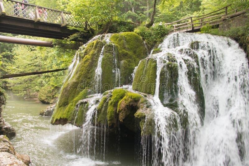 保存环境、美丽的绿色公园和森林有瀑布和小纯净的可喝的水小河的 图库摄影