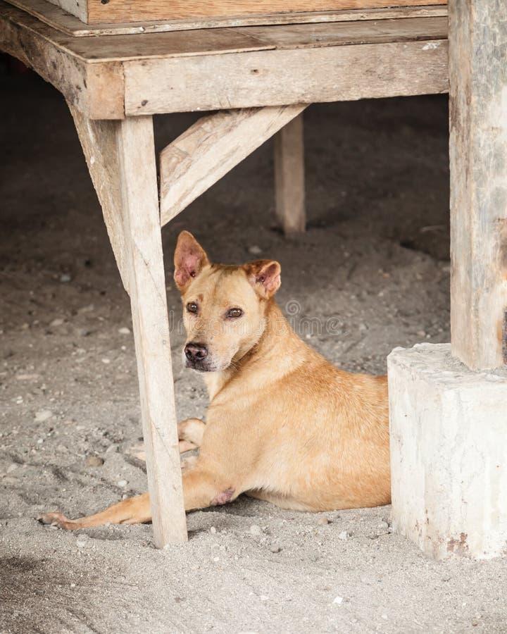 保护在建造场所的离群布朗杂种狗 免版税图库摄影