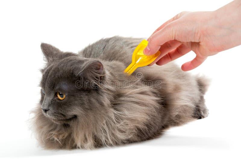 保护猫免受壁虱和蚤 库存照片