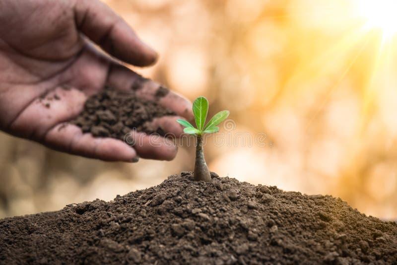保护自然以促进可持续性或环境概念 免版税库存照片
