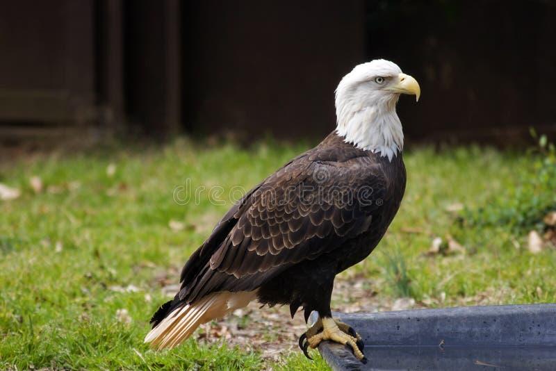 保护野生生物 免版税库存照片