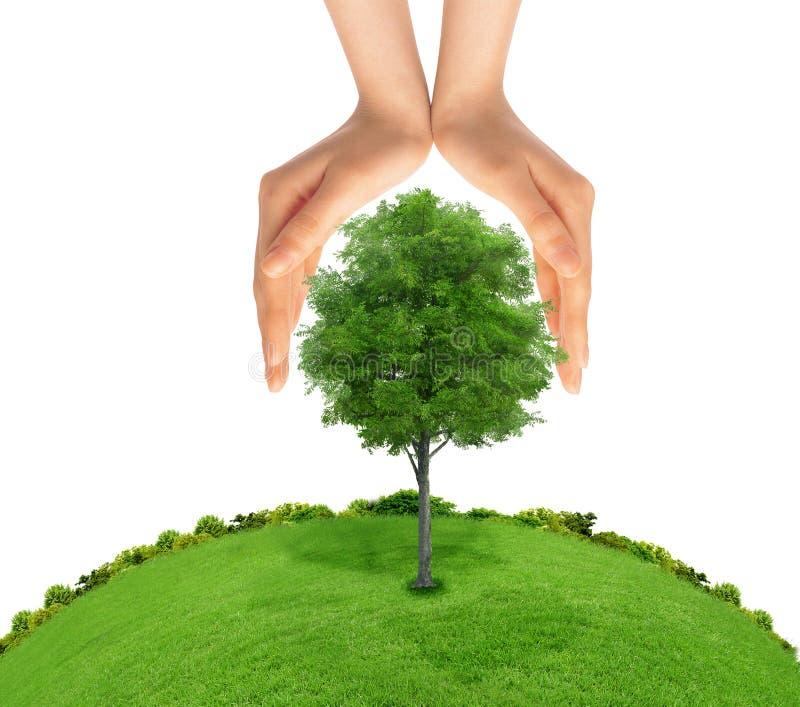 保护绿色树的人的手的概念 免版税库存图片