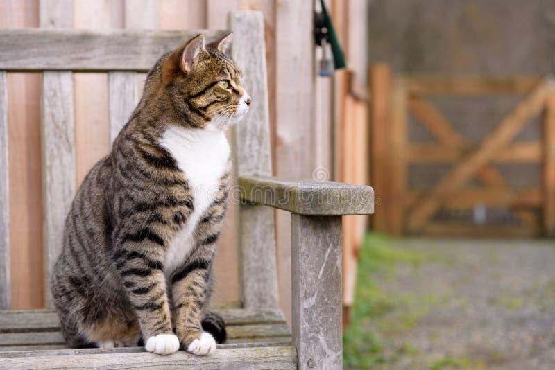 保留手表的农厂猫 免版税库存图片