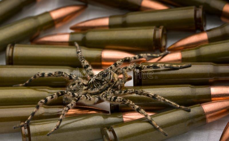 保障蜘蛛武器 免版税库存照片