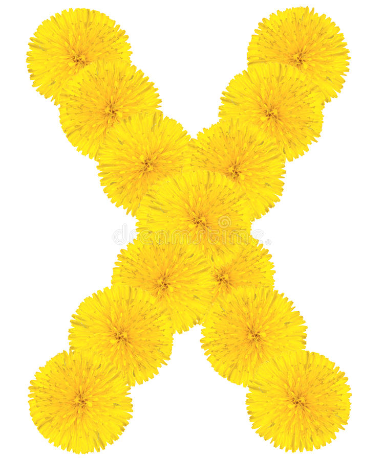 信件由蒲公英做的x 免版税库存图片