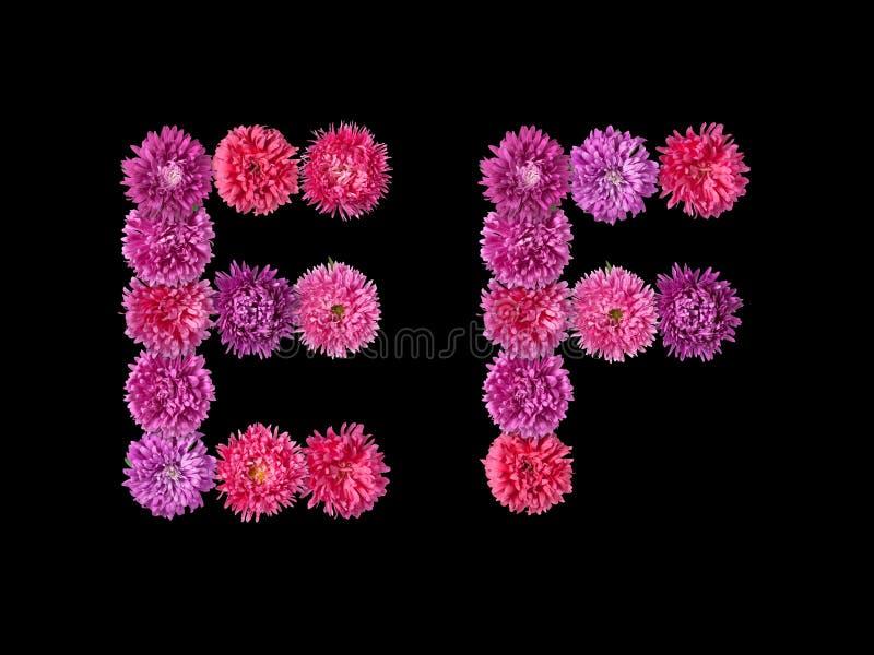 Download 信件E,从明亮的翠菊的F 库存照片. 图片 包括有 植物群, 符号, 基本, 照亮, 紫色, 粉红色, 花卉 - 62528208