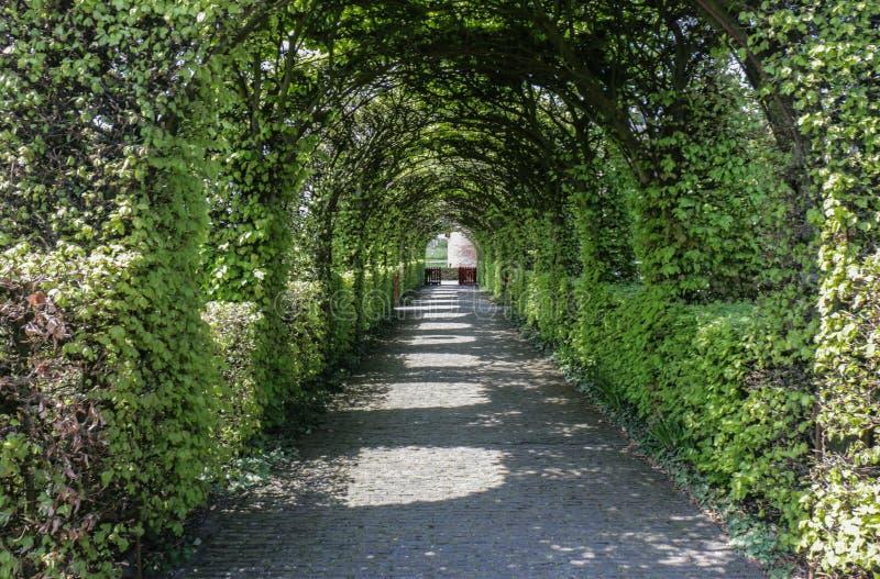 修剪的花园规则式园林曲拱道路 库存照片
