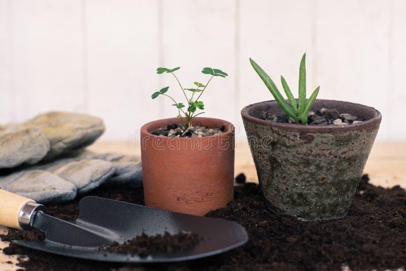 修平刀、手叉子、锄叉子、从事园艺的手套和芦荟维拉盆栽植物木背景的 免版税库存图片