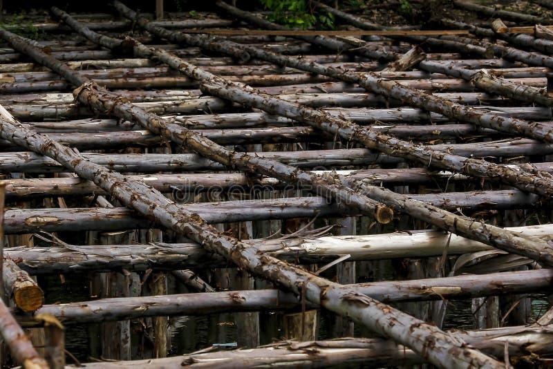 修建用于建筑的杉木日志 库存照片