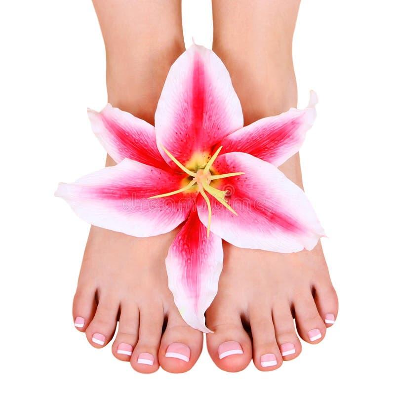 修脚。与被隔绝的百合花的美好的女性脚 库存照片