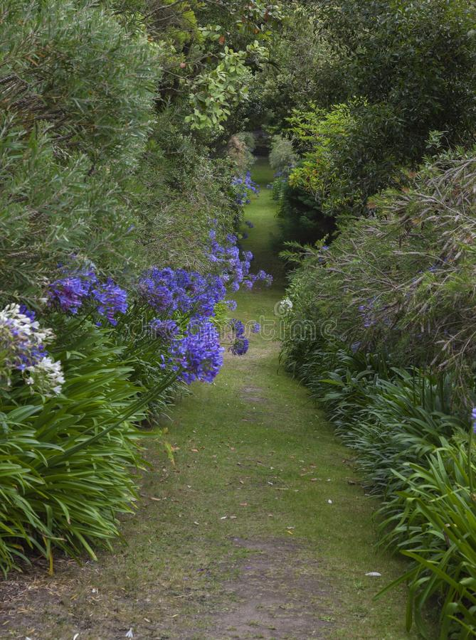 修道院庭院, Tresco,锡利群岛,英国 库存图片