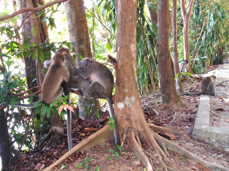 修饰的猴子 免版税库存照片