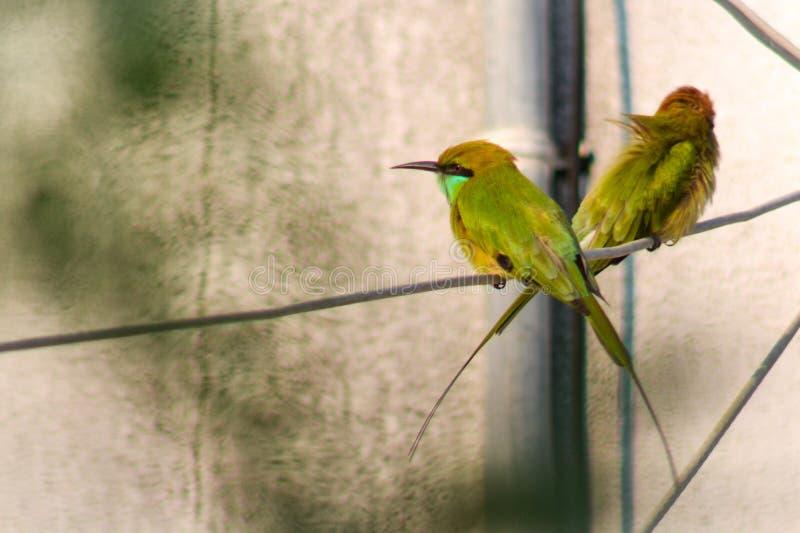 修饰的鸟 库存图片