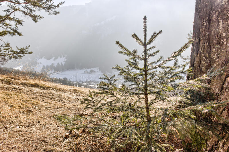 俯视多雪的谷的一点杉木发辫 库存图片