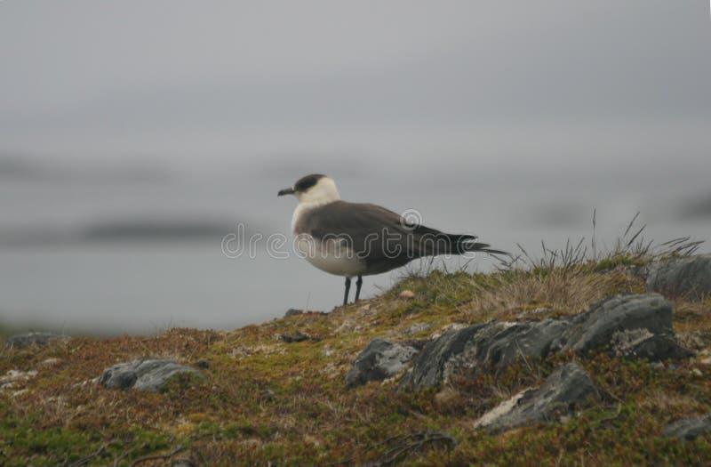 俯视海洋的大鸟 库存图片
